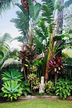 """We were influenced by the many lush tropical gardens in our coastal neighbourhood and overseas, too,"""" she says. """"Tropical plants are also amazingly hardy. It also helps that Bilgola is full of red volcanic soil so everything grows really well!"""" by jackie Tropical Backyard Landscaping, Tropical Garden Design, Florida Landscaping, Front Yard Landscaping, Tropical Plants, Landscaping Ideas, Florida Gardening, Landscaping Software, Landscaping Contractors"""