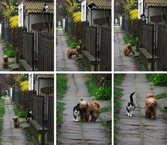 Friendship story.. aawwwwww!
