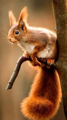Cute Baby Animals, Animals And Pets, Funny Animals, Squirrel Pictures, Funny Animal Pictures, Regard Animal, Cute Squirrel, Squirrels, Tier Fotos