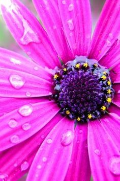 pretty in pink Pink Love, Pretty In Pink, Pink Purple, Color Fuchsia, Hot Pink, Sunflowers And Daisies, Flowers Nature, Flower Wallpaper, Shades Of Purple