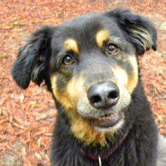 Smiling dog Jack!