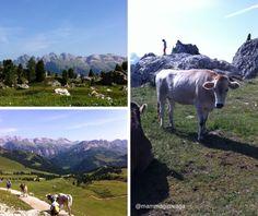 Pascoli in Val Gardena