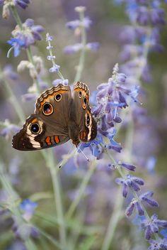 Butterfly By Shane Taitt