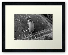 #photography #photo #art #print #artprint #streetphotography #streetphoto #bw #blackandwhite #street #frame #framedprint #findyourthing #photographs #artforsale #wallart #prague #czechia #city #urban #citylife #czechrepublic #dogs #dog #doggie #pets #animals