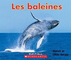3199700095770 Les baleines. Les baleines sont immenses. Elles ont de petites oreilles, mais elles arrivent à capter des sons à plus de 1600 km de distance!