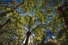 Amboro National Park by Juergen Ritterbach Tree Fern, Lake Titicaca, Giant Tree, Andes Mountains, Bolivia, Continents, My Images, South America, Fine Art America