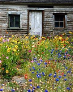 Wildflowers [via imgend]