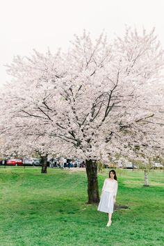 Stunning Magnolia Alley and Cherry Blossoms in Niagara Parks Cherry Blossom Tree, Blossom Trees, Visiting Niagara Falls, Canadian Winter, Spring Is Coming, Pathways, Mother Nature, Magnolia, Fields