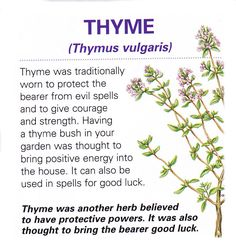 Magical herb Thyme / Book of Shadows Healing Herbs, Medicinal Plants, Natural Healing, Healing Spells, Herbal Plants, Magic Herbs, Herbal Magic, Magick, Witchcraft