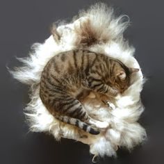 Cat Bed Cruelty Free  Felted Wool Fleece Pet Bed  by WraptCats