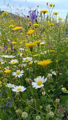 Όμορφα λουλούδια