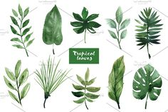 Watercolor tropical leaves - Illustrations