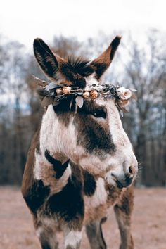 Victor Ludorum Donkey in floral headcrown