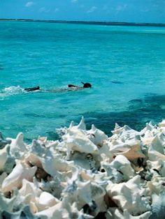 Las 10 mejores playas del mundo | Lugares de Viaje .. Foto: Los Roques - Venezuela https://play.google.com/store/apps/details?id=com.addintech.losroquesguide