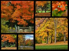 Autumn Collage Photograph by Maria Keady