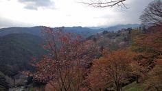 吉野山(奈良県)の桜
