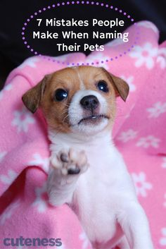 When you name your pet, don& make these pet name mistakes! Baby Animal Names, Pet Names, Baby Animals, Cute Animals, Big Dogs, Cute Dogs, Dogs And Puppies, Cute Babies, Jack Russell Puppies