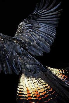 Winged series- Gary Heery