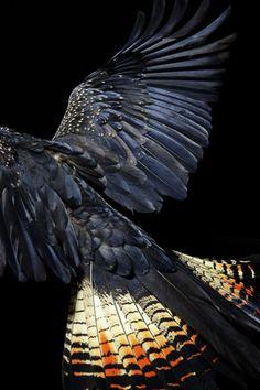 Winged series- Gary Heery