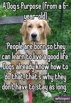 17 Best ideas about Old Dogs on Pinterest   Touching animal stories, Dog stories and Dog quotes sad