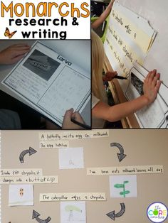Research and write about Monarch Butterflies