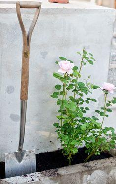 Hemlängtan: trädgårdsredskap