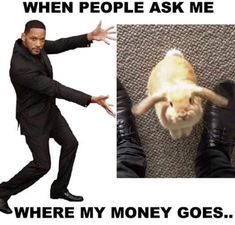 Top 21 Cyber Monday Memes These cyber Monday memes have been written humorously to make you have some fun time at work on Monday.These cyber Monday memes are so funny and able to make fun or laugh. Top 21 Cyber Monday Me Cute Baby Bunnies, Funny Bunnies, Cute Funny Animals, Cute Baby Animals, Funny Cute, Pet Bunny Rabbits, Pet Rabbit, Rabbit Life, Bunny Bunny