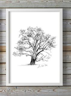 Eikenboom tekening print natuur Eikenboom potlood schets