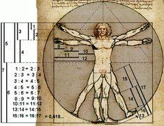 Tudo começou comLeonardo Fibonacci,que foi o primeiro a entender que numa sucessão de números, tais que, definindo os dois primeiros números da sequência como 0 e 1, os números seguintes serão obtidos por meio da soma do resultado com os seu número antecessor, portanto, os números são: 0+1=1 /1+1=2 / 2+1=3 / 3+2=5 / 5+3=8/…