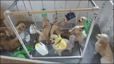 How to keep eight puppies entertained. [video]
