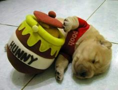 This little guy is currently in the 2nd place for our cutest Dream'n Dogs contest. Vote for him on Dogbook!
