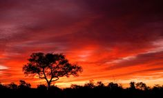 Magnificent colors in #Zambia. #sunset