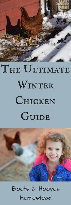 The Ultimate Winter Chicken Keeping Guide - Boots & Hooves Homestead