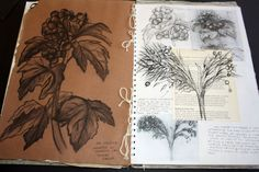 Art Sketchbook - observational drawings of organic forms // Art student portfolio A Level Art Sketchbook, Sketchbook Layout, Textiles Sketchbook, Arte Sketchbook, Sketchbook Ideas, Natural Forms Gcse, Natural Form Artists, Nail Art Designs, Kunst Portfolio
