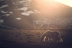 White Horses, N21, Horse Photography, Mountains, Nature, Travel, Naturaleza, Viajes, Equine Photography