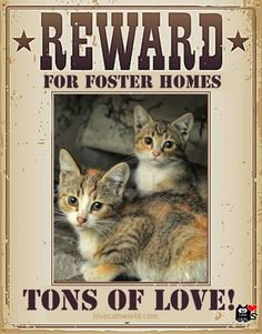 Fostering saves lives and it's such a rewarding experience! VolunteerTODAY :) and give them a second chance at life!