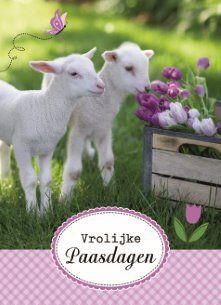 Pasen betekent lammetjes! Vrolijke paasdagen. :-) #Hallmark #HallmarkNL #Pasen #paasdagen #paashaas #paaseieren #lammetjes #lente #zon #bloemen Funny Cards, Happy Easter, Bee, Seasons, Humor, Gifts, Animals, Easter, Happy Easter Day