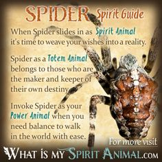 Spider Symbolism & Meaning | Spirit, Totem & Power Animal