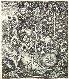 'Weeds' by Robin Tanner (etching) Vintage Botanical Prints, Botanical Drawings, Botanical Art, Botanical Illustration, Illustration Art, Wood Engraving, Flower Art, Printmaking, Illustrators