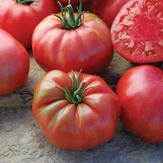 Mrs. Maxwell's Big Italian tomato is an exciting new variety. An Heirloom beauty, these vigorous potato leaved plants produce dark pink beefsteak fruits with incredible flavor. http://www.holmesseed.com/mrs-maxwells-big-italian/