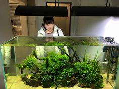 Planted Aquarium, Aquarium Garden, Aquarium Terrarium, Aquarium Landscape, Tropical Fish Aquarium, Home Aquarium, Aquarium Design, Aquascaping, Tanked Aquariums