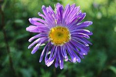 Uma flor do Jardim de Tomar