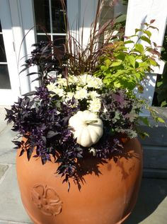 fall container garden, mums, cabbage, purple fountain grass, peppers