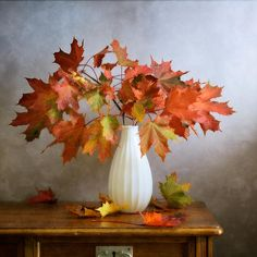 #Still #Life #Photography Maple Red Leaves Still life with autumn maple red leaves in white vase  by Nikolay Panov