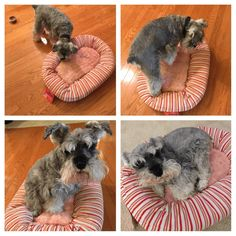 Get a free doggie bed with your first Pet Treater box!    - http://hellosubscription.com/2016/10/pet-treater-last-day-free-pet-bed-monthly-subscription/ #PetTreater #subscriptionbox