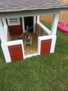 Lily and Flash's Dog House