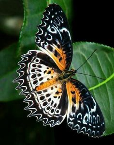Butterfly Painting, Butterfly Crafts, Butterfly Flowers, Butterfly Wings, Cool Insects, Bugs And Insects, Beautiful Bugs, Beautiful Butterflies, Colorful Moths