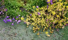 Create a xeriscaped garden: You can create a colorful garden that attract butterflies, honeybees and hummingbirds just by using plants such as lavender, Russian sage, yarrow, sedum and salvia, all of which thrive in dry conditions.    Salman suggests starting with a small area of your yard, such as 5-by-5-foot section. Add high-quality compost and organic fertilizers to the soil.