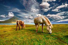Paarden, Landschap, Natuur, Gebied, Gras, Dierlijke