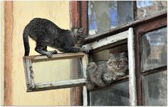 Кошки. Окно.